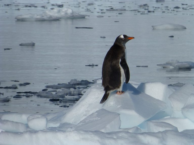 שייט לאנטארקטיקה 11 יום הפלגה אחרונה